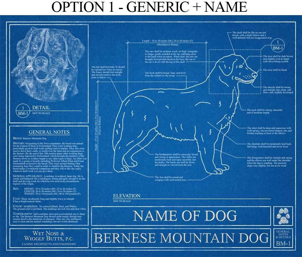 Personalized bernese mountain dog blueprint bernese mountain zoom malvernweather Gallery