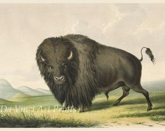 George Catlin: The Indian Gallery, Buffalo, c. 1840 - Fine Art Print.
