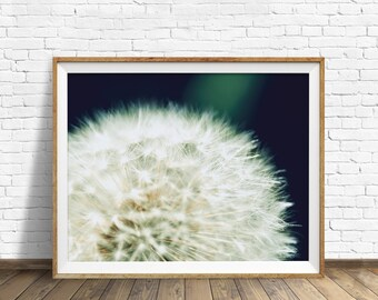 "dandelion photograph, instant download printable art, photography, large art, large wall art, botanical wall art, botanical prints -""Still"""