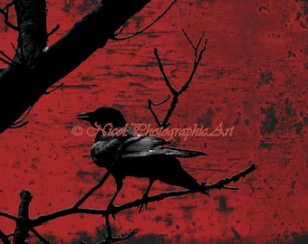 Raven Red Rust Industrial Crow Wall Art Bird On Tree Branch Home Decor Matted Picture Art Print A673
