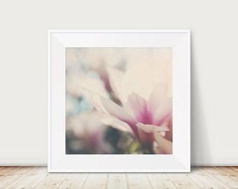 magnolia photograph magnolia tree photograph magnolia print magnolia tree print white flower photograph pink flower print