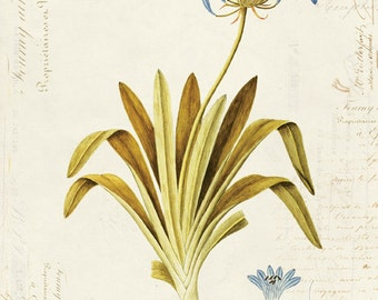 Vintage Botanical Flower on French Ephemera Print 8x10 P34