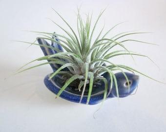 Air plant planter, Cubicle decor, air plant stand, air planter, Desk decor, blue bird planter, ring holder ring dish