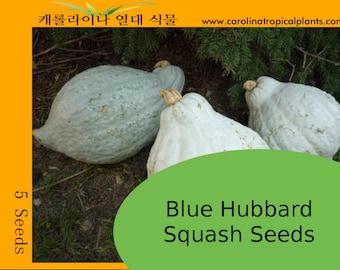 Blue Hubbard Squash Seeds - 5 Seeds