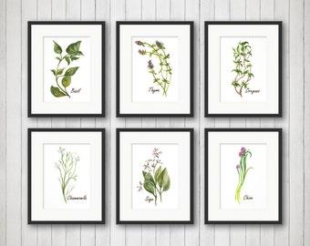Watercolor Herbs Prints - Herb Print - Herbs Kitchen Decor - Botanical Print - Kitchen Art - Culinary Herb Print - 4x6, 5x7 or 8x10