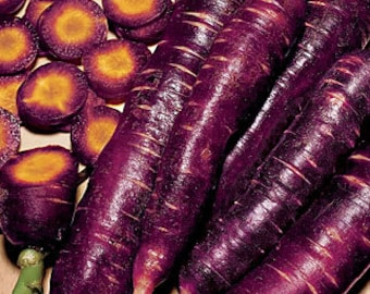 Cosmic Purple Carrot Heirloom Garden Seed Non-GMO Antioxidant Lycopene Naturally Grown Open Pollinated Gardening
