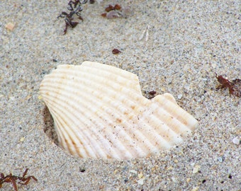 Shell Of A Day