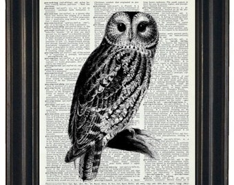 OWL Art Print Vintage Dictionary Art Dictionary Art Print Upcycled Art Book Print Owl on Vintage Dictionary Book Page 8 x 10
