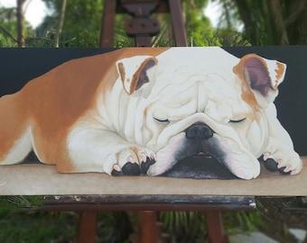 The Resting English Bulldog