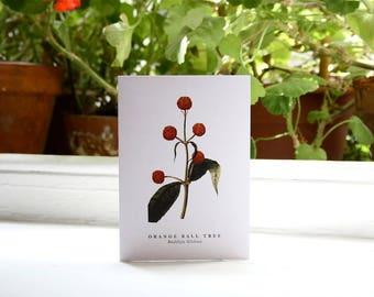 Orange Ball Tree: Greeting Card