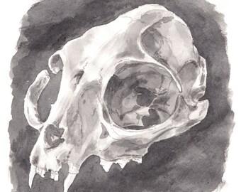 Raccoon Skull Watercolour Art Print