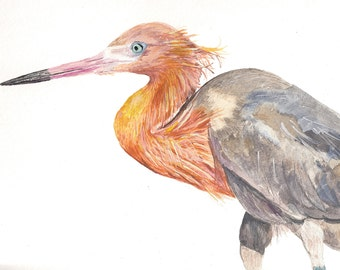 Reddish Egret Original Watercolor Painting Giclée Print (Limited Edition)