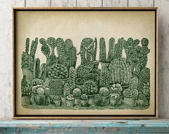 Cactus poster, botanical print, Cactus study poster, Cactus art, botanical art, botanical poster,