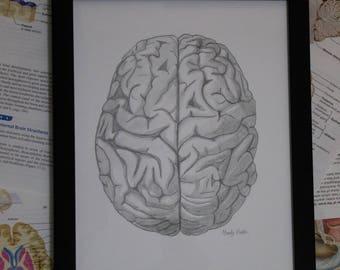 Print of Anatomical Brain