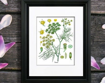 Fennel Herb Art Print no. 5 Kitchen Wall Art Culinary Herb Kitchen Decor, Gift for Mom, Gift for Her, Kitchen Decor, yellow green art