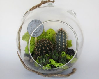 Extra Large Hanging Glass Cactus Terrarium Kit for Father's Day