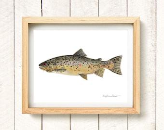 "Brown Trout - watercolor art print 8.5x11"""