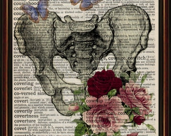 Human pelvis  vintage anatomy  Mounted Art Print. An original antique, dictionary book page.