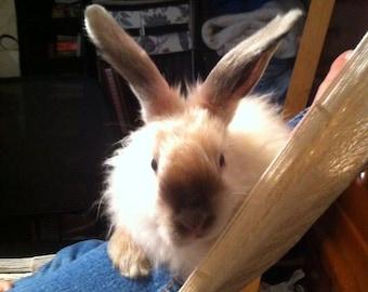 Hand Plucked White / Pearl Satin Angora Rabbit Fiber for Spinning, Knitting, Crochet, or Felting