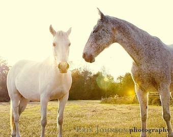 horse photography fine art horse photograph yellow decor farm decor nature horse portrait farmhouse decor Two Horses