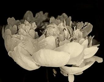 Peony Art Print, Sepia Photography,  Flower Wall Decor, Floral Artwork, Flower Photography