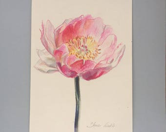 Pink peony drawing flower colored pencil drawing framed