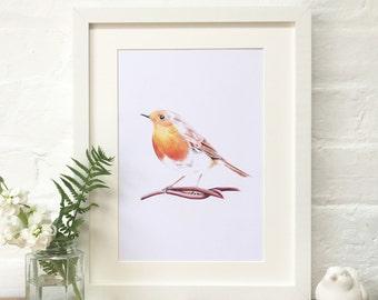 Robin Illustrated Print