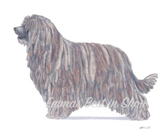 Bergamasco Dog - Archival Fine Art Print - AKC Best in Show Champion - Breed Standard - Herding Group - Original Art Print