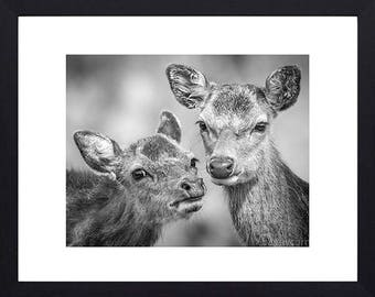 Deer Friends- FREE POSTAGE-Photographic print in black and white- wildlife photography- nature photography-animal portrait- birthday gift