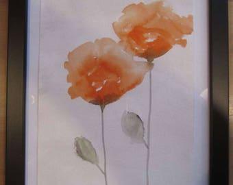 Orange Poppy Poppy