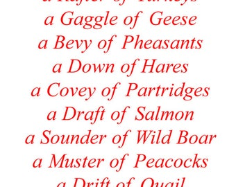 Gift Tag - Collective Nouns for Animals, Birds, Fish & Insects