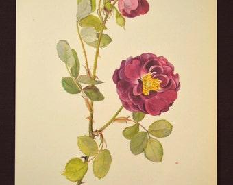 Purple Rose Print Rose Flower Print Floral Plate Gipsy Boy