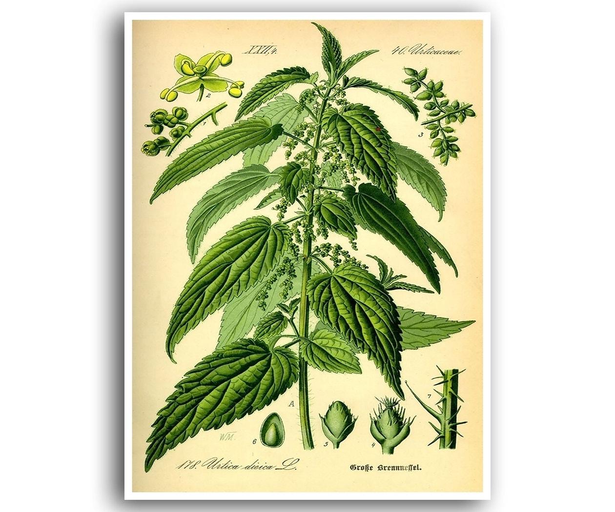 Marijuana Art Cannabis Print Weed Poster Hemp Plant Wall Decor