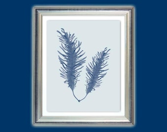 Sea fan art, Sea blue seaweed, Seaweed poster, Alga print, Nautical art, Beach house decor, Nursery art, Bathroom decor,Instant download