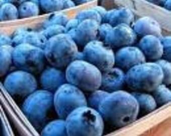 50 Dwarf Blueberry seeds-1019A