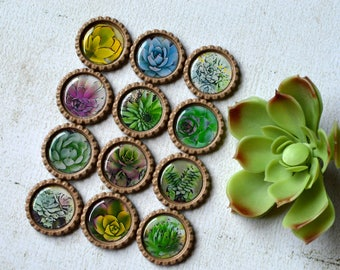 Succulent Cactus Bottlecap Magnets- Succulent Decor- Plant Decor- Kitchen Decor- Fridge Magnets- Succulent Party Favors- Garden Gift