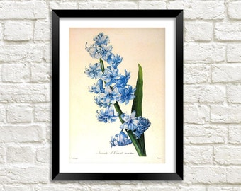 HYACINTH ART PRINT: Vintage Blue Flower Illustration Wall Hanging (A4 / A3 Size)