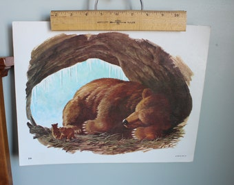 1965 Bear Den Print, Laminated Classroom Poster, DCC Publ. Co. No. 10,  13.75x10.75 Inches, School Print