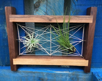 Wooden frame with air plant arrangement