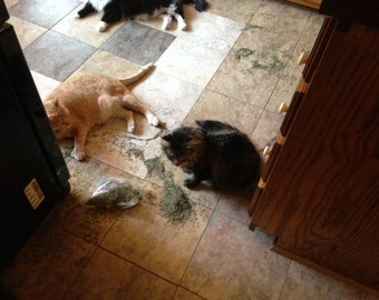 Sample Size Bag of Catnip - Small Bag of Dried Catmint - 1/4 cup  Super Potent Catnip - Dried Herb Supplies