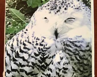 Vermont Snowy Owl Magnet