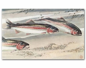 "Rainbow Trout Print (Vintage Trout Art, 1930s Fishing Gift for Women) --- ""Rainbow & Steelhead Trout"" No. 273"