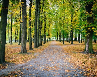 Early autumn color seen at Kadrioru Park, in Tallinn, Estonia. Photo Print, Metal, Canvas, Framed.