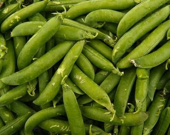 Pea Lincoln 30+ seeds - heirloom seeds - vegetable seeds - garden seeds - pea seeds - lincoln pea seeds - shelling pea seeds - sugar pea