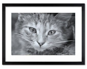 Cat photo - Wall decor pet photography - prints canvas or paper print in sizes 8x12, 12x18, 16x24, 24x36