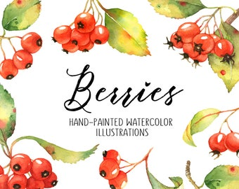 Berries watercolor clipart, Berries illustration, Watercolor fruit, Still life, Fruits Clipart, Bruit branch, Kitchen decor, Autumn clipart