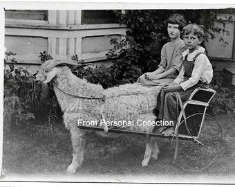 RPPC Real Photo Postcard Children & their Goat cart Very Fine