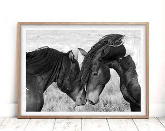 Horse Print, Horse Print Wall Art, Black and White Photography, Printable Art, Wild Horse Photo, Equestrian, Two Horses, Wilderness Print