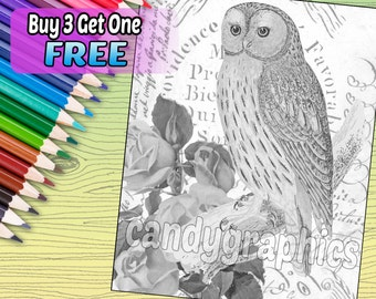 Grayscale Owl - Adult Coloring Book Page - Printable Instant Download
