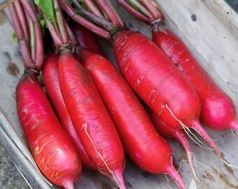 China Rose Radish Heirloom Seeds - Non-GMO, Open Pollinated, Untreated